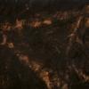 Zwei tote Birken